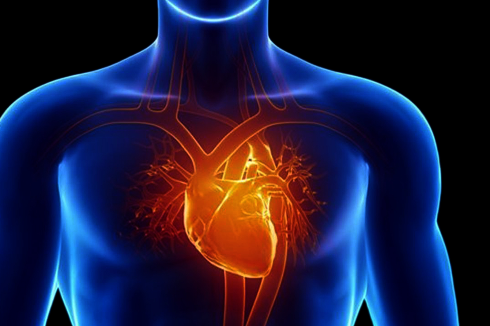 cardiac-and-vascular-expertise-reading
