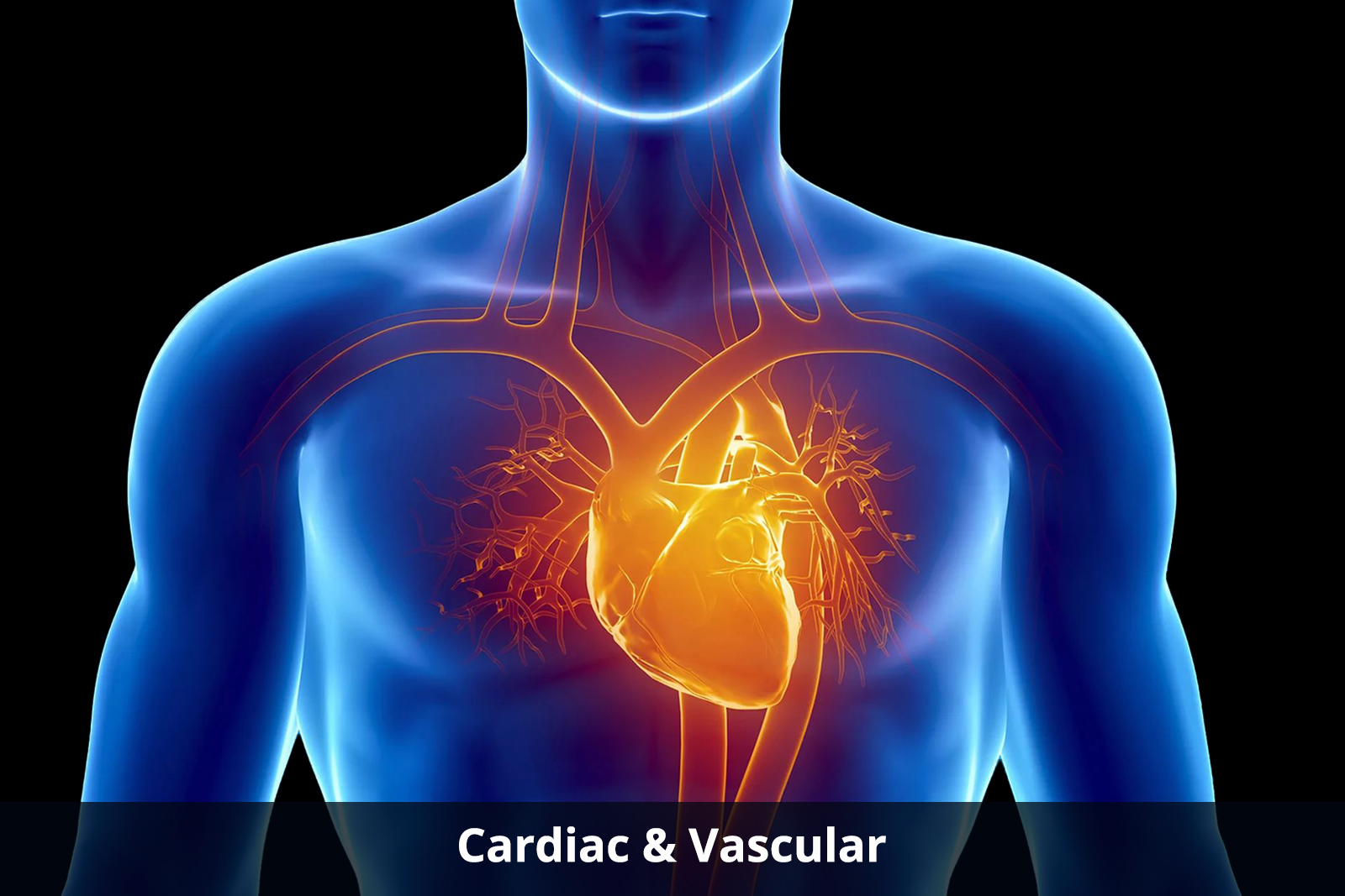 cardiac-and-vascular-about
